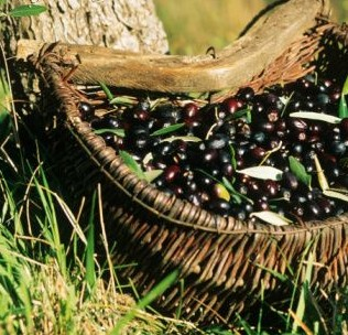 Beneficios del orujo de oliva